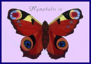 Nymphalis io