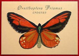 Ornithoptera Priamus croesus