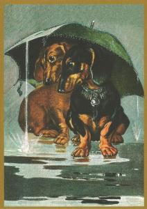 Postkarte vermenschlichte Tiere beglittert 6Vg034
